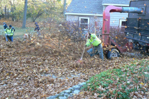 Fall Clean-up 2015